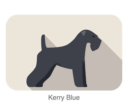 kerry blue terrier: kerry blue terrier standing an watching, flat icon design, vector illustration