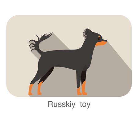 Russkiy toy terrier standing and watching