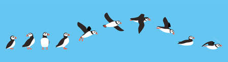 flying sequence of puffin, multiple exposure, vector Illustration
