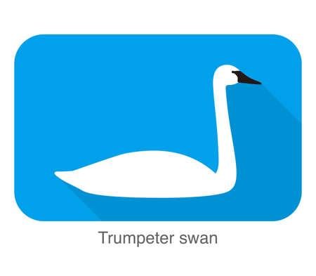 trumpeter swan, cartoon flat icon  vector illustration Illustration