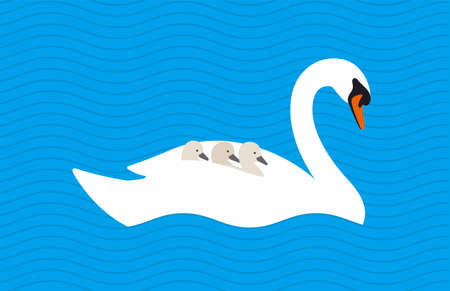 swan baby on the back of mother in the lake, vector illustration