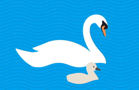 swan baby swimming in the lake with its mother, vector illustration