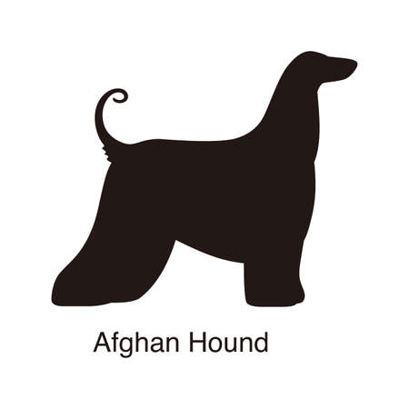 Afghan Hound dog silhouette, side view, vector illustration Illustration