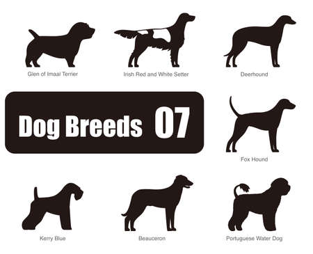 kerry blue terrier: set of dog breeds, black and white, side view, vector illustration Illustration