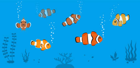 clown fish swimming in the sea, seaweed  vector illustration