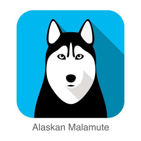 Siberian Husky face, Alaskan Malamute  vector illustrator