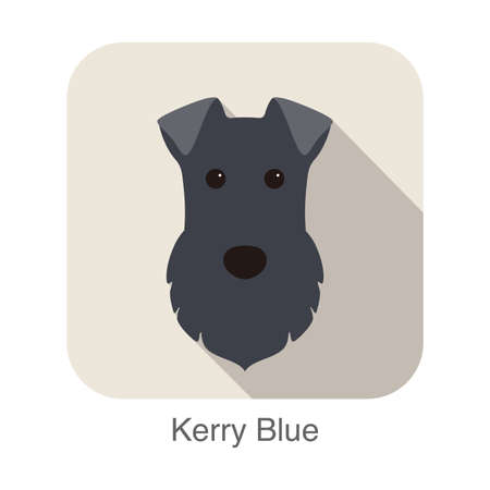 kerry blue terrier: kerry blue terrier dog face portrait flat icon design, vector illustration