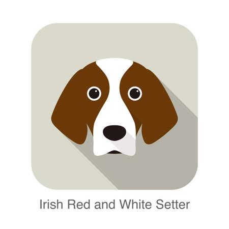 Irish red and white setter terrier dog face portrait, vector illustration