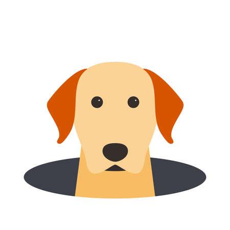labrador: Golden Retriever dog on the hole