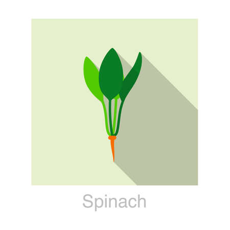 Spinach Vegetables food flat icon  vector illustration Illustration