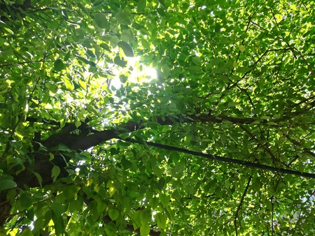 The sunlight and leaves