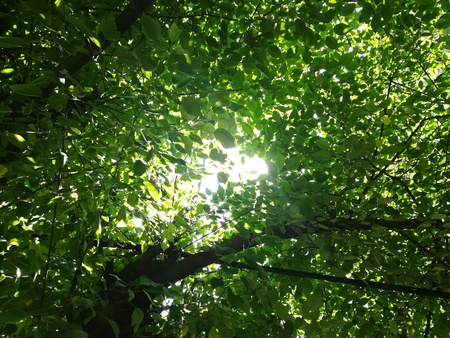 The sun and leaves