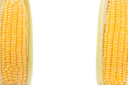 sweetcorn: Two Sweetcorn with white copy space
