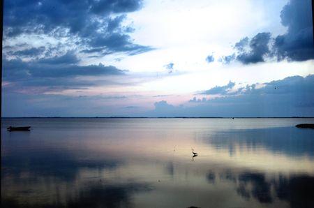 Heron Sunset photo