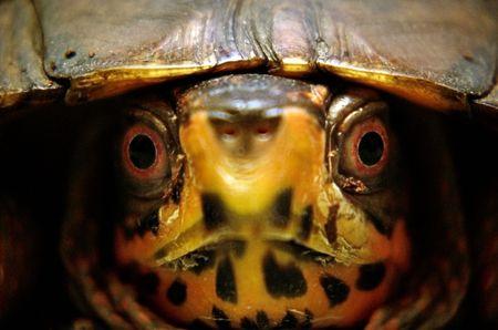turtle face photo