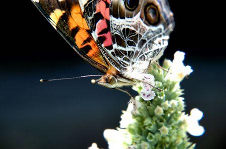 Butterfly Macro Фото со стока