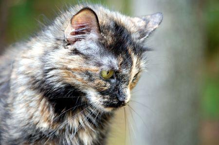 sad kitty Stock Photo