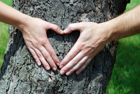 Couple is putting their hands on tree in a shape of heart  photo