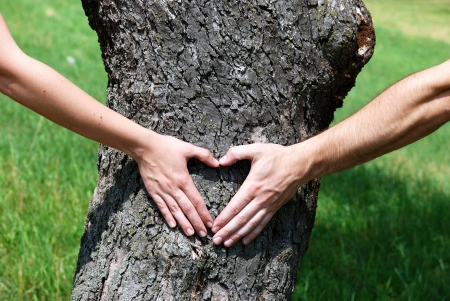Couple is putting their hands on tree in a shape of heart Stock Photo - 16615427