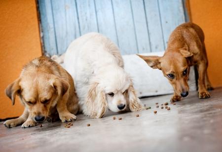 perro comiendo: Perros lindos están comiendo comida para perros.