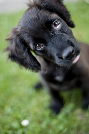 cute dog: Cute dog is playing outside Stock Photo