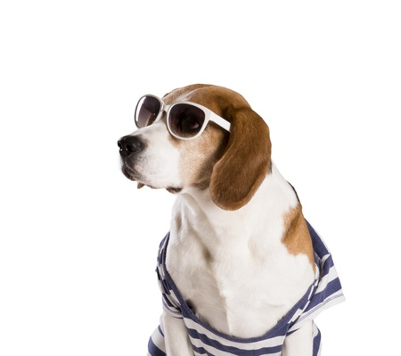 Dog is posing in studio - isolated on white background Banco de Imagens
