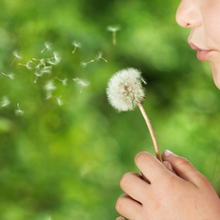 Cute little girl is blowing to dandelion in the green park Stock Photo - 19938339