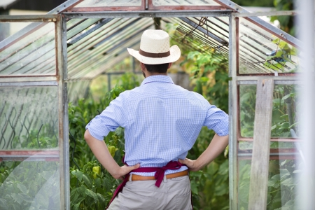 Young male gardener working in the greenhouse photo