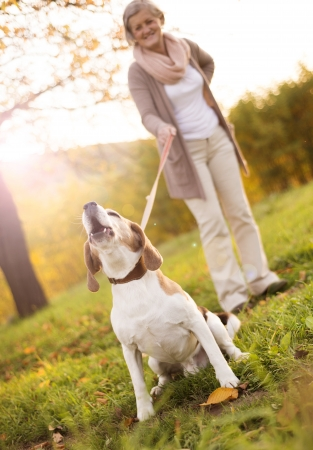 frau mit hund: �ltere Frau, die zu Fu� mit ihrem Beagle-Hund in der Landschaft Lizenzfreie Bilder