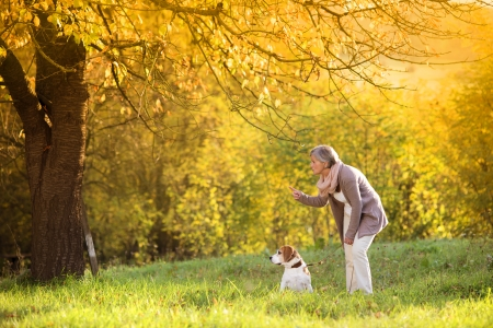 beagle terrier: Senior woman walking her beagle dog in countryside