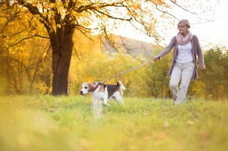 Senior woman walking her beagle dog in countryside photo