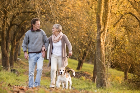 active woman: Senior couple walking their beagle dog in autumn countryside