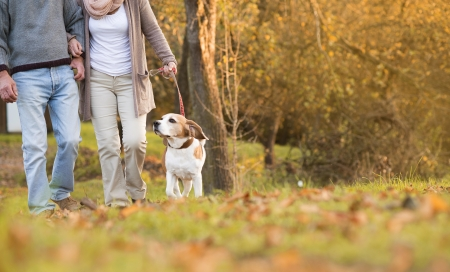 ancianos caminando: Pares mayores que recorren su perro beagle en otoño campo