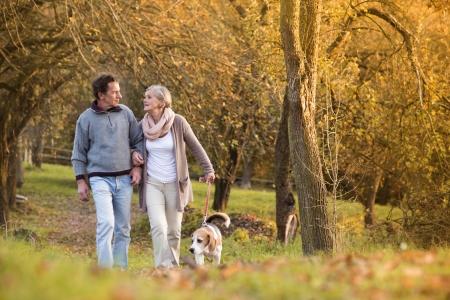 seniors walking: Senior couple walking their beagle dog in autumn countryside