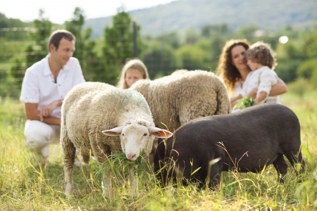 feeds: Family with five kids is feeding animals on the farm