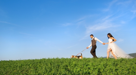 groom and bride: Bride and groom walk their beagle dog in the green field