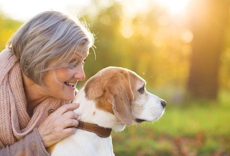 수석 여자 시골에서 그녀의 비글 강아지를 포옹 스톡 콘텐츠