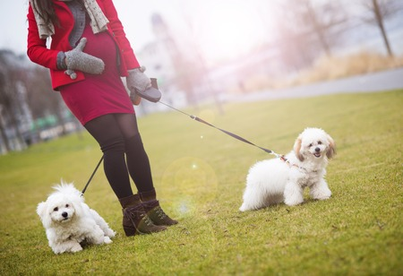 Winter outdoor portrait of pregnant woman in fashionable clothes walking two dogs photo