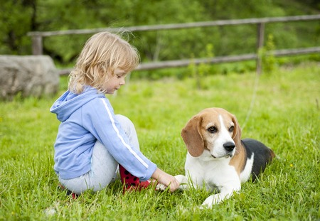 endearment: Little girl with her beagle dog