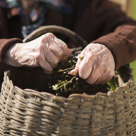 Deatil of old woman hands picking grass  Stock Photo - 27501812