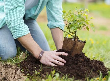 Close-up van de jonge mens de handen van het planten van kleine boom in zijn achtertuin