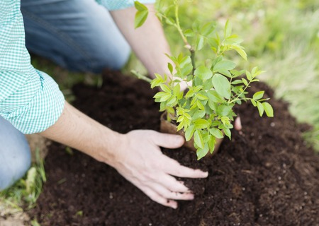 planting: Close-up of young man s hands planting small tree in his backyard garden Stock Photo
