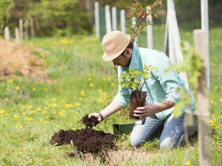 Jonge knappe man het planten van een kleine boom in zijn achtertuin
