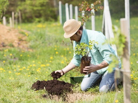 Young handsome man planting a small tree in his backyard garden photo