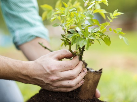 Close-up of young man s hands planting small tree in his backyard garden Imagens