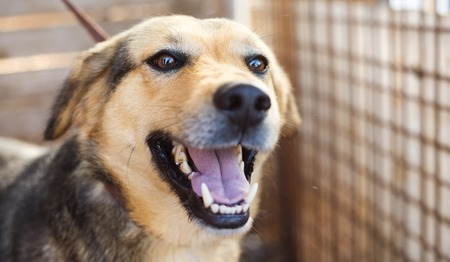 dog collar: A dog in an animal shelter, waiting for a home