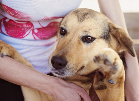 beloved: Close-up of woman holding and stroking her dog Stock Photo
