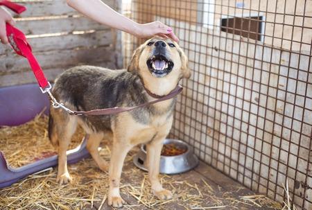 Een hond in een dierenasiel, te wachten op een huis