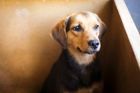 humane: A dog in an animal shelter, waiting for a home