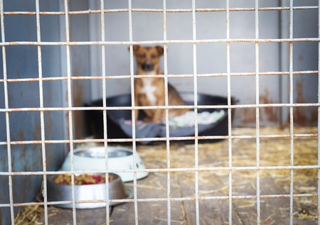 A dog in an animal shelter, waiting for a home Reklamní fotografie - 28244859